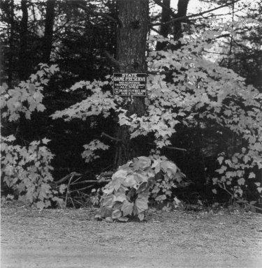 William Wegman (American, born 1943). October 1981, Rangeley, Maine, 1982. Photo-dye transfer print, Sheet: 25 x 20 1/2 in. (63.5 x 52.1 cm). Brooklyn Museum, Gift of the American Art Foundation, 84.82.13. © William Wegman