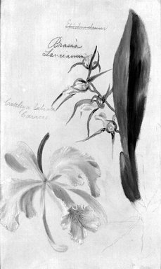 William Jacob Hays (American, 1830-1875). Two Orchids, Brassia Lanceana, Cattleya Labiata, 1869. Oil and graphite on canvas, 12 3/8 x 7 5/8 in. (31.4 x 19.4 cm). Brooklyn Museum, Gift of Mr. and Mrs. Leonard L. Milberg, 85.121.1