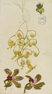 William Jacob Hays (American, 1830-1875). Three Orchids, Acropera, Peristeria Elata, Cattleya Bicolor, 1869. Oil and graphite on canvas, 14 1/2 x 8 1/2 in. (36.8 x 21.6 cm). Brooklyn Museum, Gift of Mr. and Mrs. Leonard L. Milberg, 85.121.2