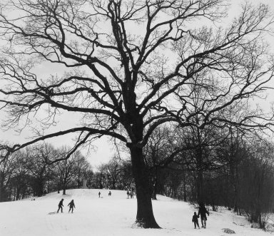 George Forss (American, born 1941). Winter '83 (Prospect Park), 1983; printed 1985. Gelatin silver photograph, image: 14 1/2 x 17 in. (36.9 x 43.2 cm). Brooklyn Museum, Charles Stewart Smith Memorial Fund, 85.141.9. © George Forss