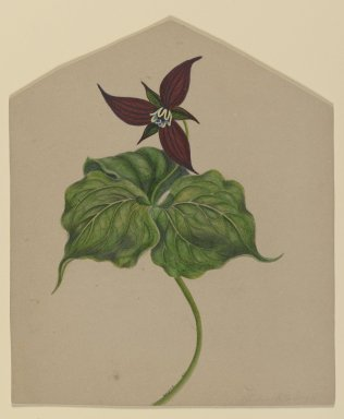 H. Lynde. Burgundy Red Flower, 1861. Watercolor on paper Brooklyn Museum, Purchased with funds given by Mr. and Mrs. Leonard L. Milberg, 85.178.1