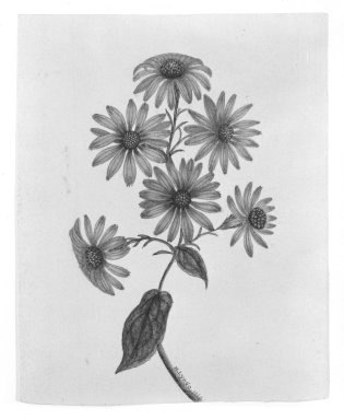 Brooklyn Museum: Purple Flowers
