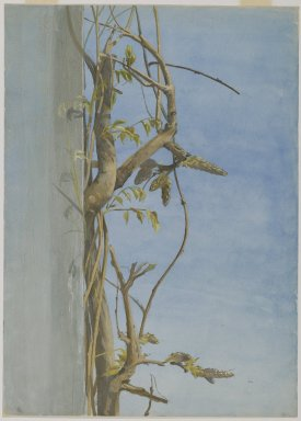 Fidelia Bridges (American, 1834-1923). Wisteria on a Wall, 1870s. Watercolor over graphite on paper, 14 x 10 1/16 in. (35.6 x 25.6 cm). Brooklyn Museum, Gift of Mr. and Mrs. O. Kelley Anderson, Jr., 85.225