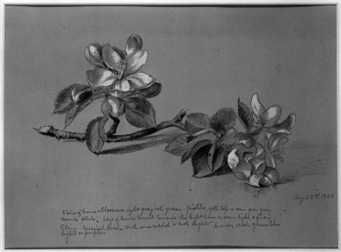 UNKNOWN, possibly Horace Robbins Burdick (American, 1844-1942). Blossoms, 1881. Watercolor, graphite, and possibly charcoal on paper, Sheet (irregular): 8 3/8 x 11 in. (21.3 x 27.9 cm). Brooklyn Museum, Purchased with funds given by Mr. and Mrs. Leonard L. Milberg, 85.83.2