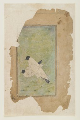Study of a Pair of Doves, ca. 1650. Opaque watercolors on paper, 5 3/4 x 3in. (14.6 x 7.6cm). Brooklyn Museum, Gift of the Ernest Erickson Foundation, Inc., 86.227.152