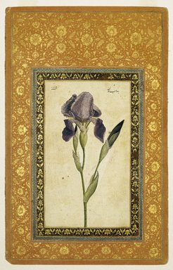 Muhammad Zaman (Persian, active 1649-1704). Blue Iris, A.H. 1074-1075/1663-1664 C.E. Ink, opaque watercolor on paper; gilded borders, Sheet: 13 1/16 x 8 3/8 in. (33.2 x 21.3 cm). Brooklyn Museum, Hagop Kevorkian Fund and Special Middle Eastern Art Fund, 86.23