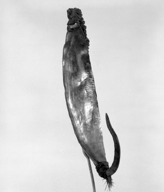 Maori. Fishhook (Matau). Paua shell, iron, sennit, cord, 4 1/4 x 7/8 x 1/8 in.  (10.8 x 2.2 x 0.3 cm). Brooklyn Museum, Gift of Marcia and John Friede and Mrs. Melville W. Hall, 87.218.107. Creative Commons-BY