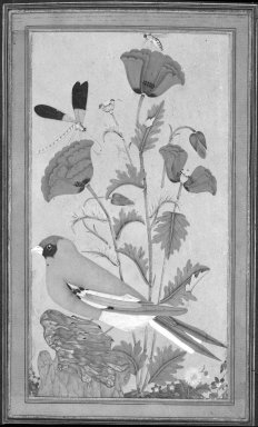 Indian. Finch, Poppies, Dragonfly, and Bee, 1650-1670. Opaque watercolor and gold on paper, sheet: 11 1/2 x 7 3/4 in.  (29.2 x 19.7 cm). Brooklyn Museum, Ella C. Woodward Memorial Fund, 87.85