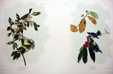 John James  Audubon (American, born Haiti, 1785-1851). Nashville Warbler and Azure Warbler, 1861. Chromolithograph Brooklyn Museum, Gift of Seymour R. Husted Jr., 06.339.11a-b