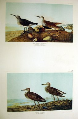 John J. Audubon (American, 1785-1851). Red-backed Sandpiper and Pectoral Sandpiper, 1861. Chromolithograph, Sheet: 40 x 27 1/8 in. (101.6 x 68.9 cm). Brooklyn Museum, Gift of Seymour R. Husted Jr., 06.339.25a-b