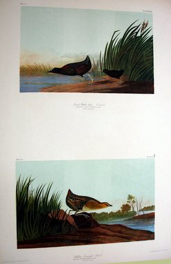 John J. Audubon (American, 1785-1851). Least Water Hen and Yellow-breasted Rail, 1861. Chromolithograph Brooklyn Museum, Gift of Seymour R. Husted Jr., 06.339.27a-b