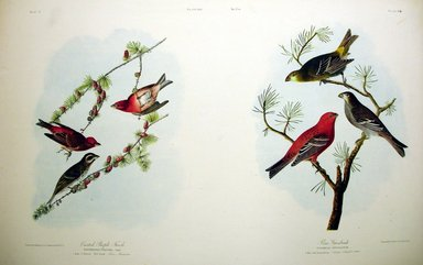 John J. Audubon (American, 1785-1851). Crested Purple Finch and Pine Grosbeak, 1861. Chromolithograph Brooklyn Museum, Gift of Seymour R. Husted Jr., 06.339.35a-b