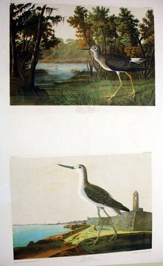 John J. Audubon (American, 1785-1851). Yellow Shank and Green Shank, 1861. Chromolithograph Brooklyn Museum, Gift of Seymour R. Husted Jr., 06.339.44a-b