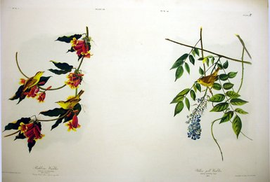 Brooklyn Museum: Rathbone Warbler and Yellow-Poll Warbler