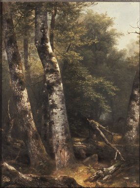 Asher B. Durand (American, 1796-1886). Landscape (Birch and Oaks), ca. 1855-1857. Oil on canvas, 23 15/16 x 17 7/8 in. (60.8 x 45.4 cm). Brooklyn Museum, Bequest of Charles A. Schieren, 15.326