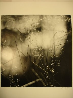 David Akiba (American, born 1940). Olmsted Park, Jamaica Plain (Weeds in Water), 1990. Gelatin silver photograph, image: 10 x 10 in. (25.4 x 25.4 cm). Brooklyn Museum, Gift of David M. Saks and Aron Katz, by exchange and Alfred T. White Fund, 1996.18.2. © David Akiba