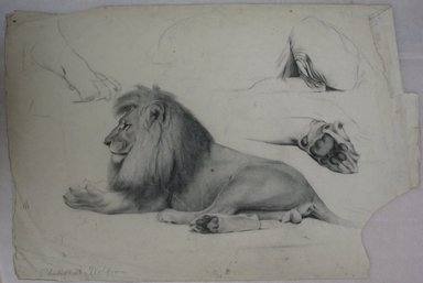 Philip H. Wolfrom (American, 1870-1904). Studies of a Lion, n.d. Graphite and charcoal on paper, Sheet: 12 7/16 x 18 3/4 in. (31.6 x 47.6 cm). Brooklyn Museum, Gift of Anna Wolfrom Dove, 27.816