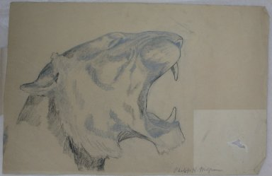 Brooklyn Museum: Head of Roaring Lion (recto) and Bison (verso)
