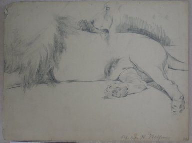 Philip H. Wolfrom (American, 1870-1904). Studies of Lion, n.d. Graphite on paper, Sheet: 8 15/16 x 11 7/8 in. (22.7 x 30.2 cm). Brooklyn Museum, Gift of Anna Wolfrom Dove, 27.827