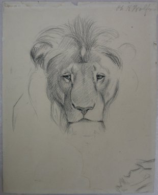 Philip H. Wolfrom (American, 1870-1904). Head of Lion (recto) and Studies of Lion (verso), n.d. Graphite on paper, Sheet: 10 5/16 x 8 1/8 in. (26.2 x 20.6 cm). Brooklyn Museum, Gift of Anna Wolfrom Dove, 27.828