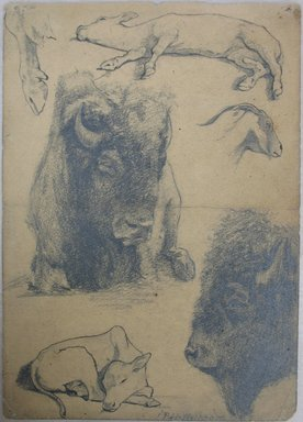 Philip H. Wolfrom (American, 1870-1904). Studies of Bison, Calf and Goat, n.d. Graphite and ink on paper, Sheet: 9 3/4 x 7 in. (24.8 x 17.8 cm). Brooklyn Museum, Gift of Anna Wolfrom Dove, 27.837