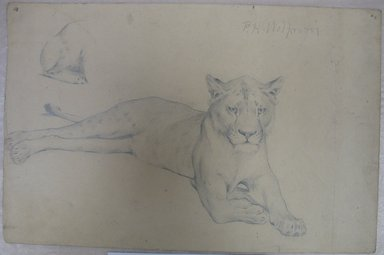 Brooklyn Museum: Seated Lioness