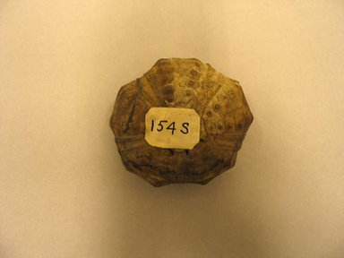Petrified Sea Urchin. Animal remains, 1 1/8 x Diam. 2 1/16 in. (2.8 x 5.2 cm). Brooklyn Museum, Charles Edwin Wilbour Fund, 37.2042.6E. Creative Commons-BY