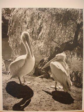 Dr. Drahomir Josef Ruzicka (American, born Czech Republic, 1870-1960). The Boss. Photograph on paper, 9 13/16 x 12 3/8 in. (25 x 31.5 cm). Brooklyn Museum, Gift of the artist, 42.63