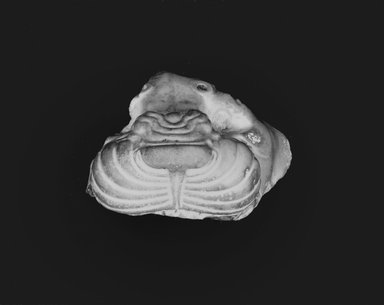Fragment of Forepart of Head of Lion. Limestone, 2 13/16 x 3 7/16 in. (7.2 x 8.7 cm). Brooklyn Museum, Gift of Mr. and Mrs. Alastair Bradley Martin, 48.174. Creative Commons-BY