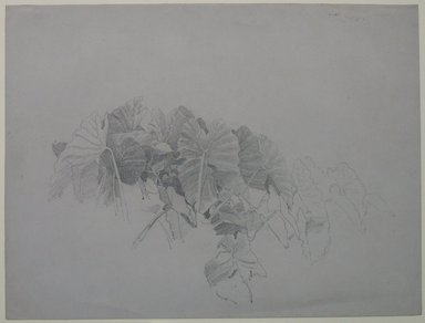 William Trost Richards (American, 1833-1905). Leaves, n.d. Graphite on gray paper, Sheet: 9 1/4 x 12 3/8 in. (23.5 x 31.4 cm). Brooklyn Museum, Bequest of Mrs. William T. Brewster, 53.242.2