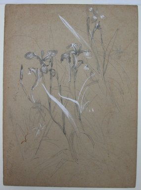 William Trost Richards (American, 1833-1905). Plant Study, June 30, 1859. Graphite and Chinese white on tan paper, Sheet: 7 9/16 x 5 9/16 in. (19.2 x 14.1 cm). Brooklyn Museum, Gift of Edith Ballinger Price, 72.32.10