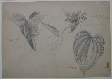 William Trost Richards (American, 1833-1905). Plant Study, August 1860. Graphite on beige, moderately thick, slightly textured wove paper, Sheet: 5 5/8 x 8 1/16 in. (14.3 x 20.5 cm). Brooklyn Museum, Gift of Edith Ballinger Price, 72.32.12