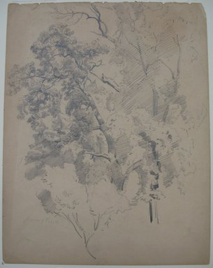 Brooklyn Museum: Tree Study