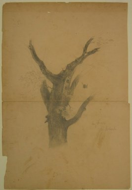 William Trost Richards (American, 1833-1905). Study of Tree Trunk, August 1, 1854. Graphite on paper, Sheet: 21 7/8 x 15 in. (55.6 x 38.1 cm). Brooklyn Museum, Gift of Edith Ballinger Price, 72.32.34