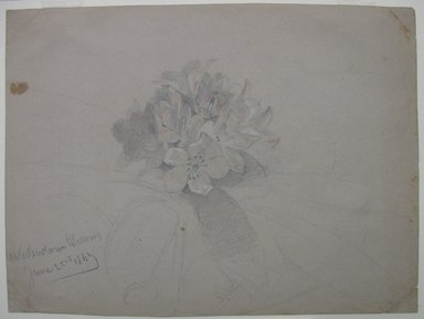 William Trost Richards (American, 1833-1905). Flower Study, June 22, 1869. Graphite with touches of watercolor and Chinese white on gray paper, Sheet: 6 x 8 in. (15.2 x 20.3 cm). Brooklyn Museum, Gift of Edith Ballinger Price, 72.32.8