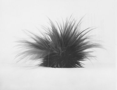 Feather Headdress, mid 20th century. Cassowary feathers, basketry base, 14 x 4 x 3 in. (35.6 x 10.2 x 7.6 cm). Brooklyn Museum, Gift of the United States Customs Service, 78.179. Creative Commons-BY