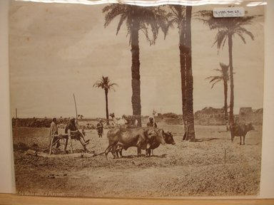 Pascal Sébah (Turkish, 1823-1886). Agricultural Scene; Men with Gamoussa, Egypt, late 19th century. Albumen silver photograph Brooklyn Museum, Gift of Matthew Dontzin, 85.305.27