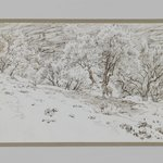 Olive Trees, Valley of Hinnom (Oliviers, vallée de Hinon)