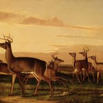 Startled Deer--A Prairie Scene