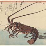 Crayfish and Two Shrimps