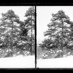Prospect Park, Late Snow, Brooklyn