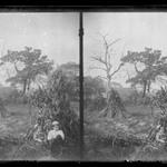 Boys and Corn-Stacks, near Bergen Van Wyck House (outside of Frame Lots), Flatlands, Brooklyn