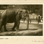 Elephant, Central Park, New York
