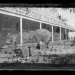 Elephant, Coney Island, Brooklyn