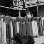 Cow and Silk, Benares