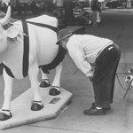 """""""Cow"""" N.Y.C."""