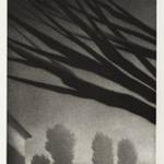 Branches, Millerton