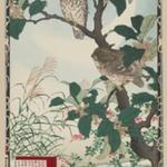 Owls on Tree Limb