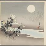 Chrysanthemums by Stream