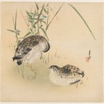 Two Quail